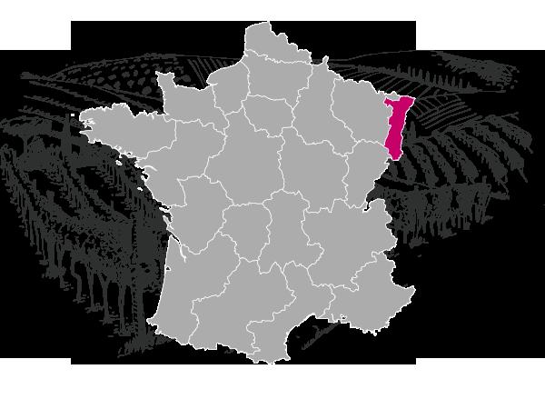 presentation-vignoble-alsacien-decouverte-des-vins-alsace