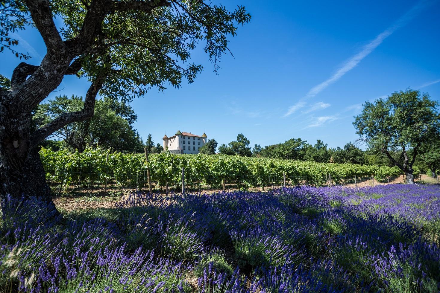 route-des-vins-provence-cote-azur-cannes